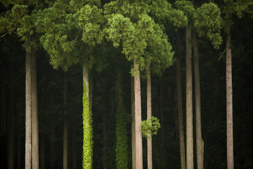 trees_farm